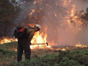 State sees savings as fires burn 5 percent of average acreage this summer
