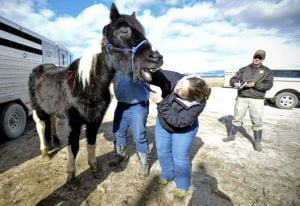 Deputies seize 29 horses after neglect reports