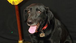 No intent found in Wyoming police dog case, DA says