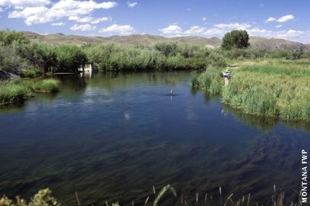 Project proposed to improve poindexter slough fishery for Beaverhead fishing report