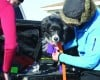 Donna Bahr of Anaconda wraps the paws of search dog Jetta