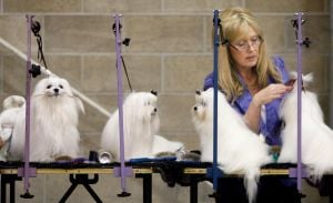 Canines come from near, far for annual YVKC dog show