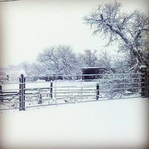 Reader gallery: Winter weather
