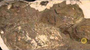 Montana Prehistory Minute: A giant Montana paleo-omelette