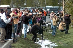 Yellowstone visit numbers up in June
