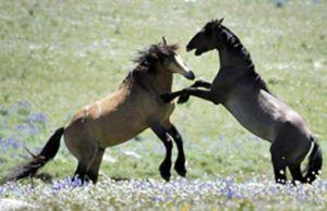 Wyoming House panel OKs resolution on wild horse population