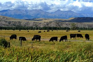Weather, cattle prices color the 2014 agriculture economy