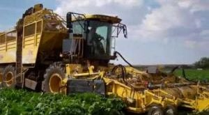 ROPA harvester makes quick work of sugar beet rows