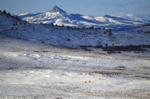 Mapping winter ground: As technology improves, researchers learn more about animal migrations