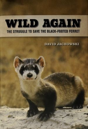 Book captures the struggle to save the black-footed ferret