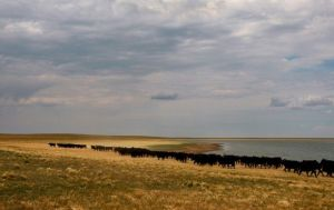 Wyoming producers brace for change in Beef Checkoff