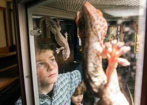 Geckos, homestead celebration highlight summer at Museum of the Rockies