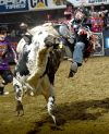 PBR: Bull riders have a simple strategy: 'Hold the hell on'