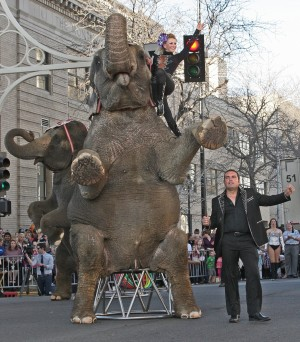 Animal rights group files complaint over circus elephant 'abscess'