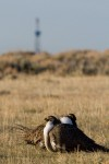 Wyoming Game and Fish Commission weighs hunting seasons