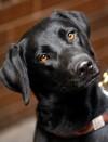 Pet of the week: Pippa