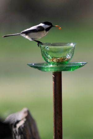 Try bird feeders to enjoy close-up views