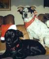 Mark Bennett's dogs.