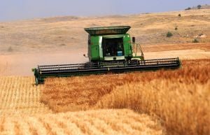 Low wheat prices stress young farmers