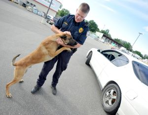 Release of police dog sends car theft suspect to the ground