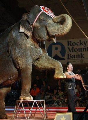 Shrine Circus kicks off