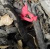 ExxonMobil oil spill