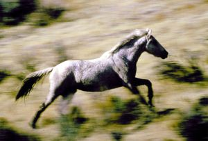 Wild horse advocates push to enter Wyoming lawsuit