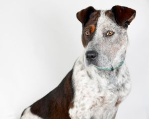 Pet of the Week: Chester