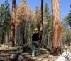 Forest Service seeks comments on thinning project