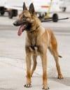 A new police dog