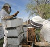 Ehrin Stevens and Shawn Shifley check a beehives