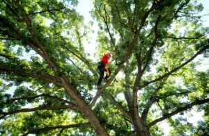 Missoula arborist heads to world tree climbing competition