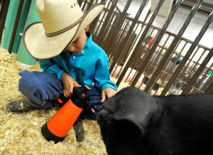 Junior Livestock Sale draws a crowd to last day at MontanaFair