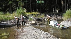 FWP seeks to poison brook trout in Yellowstone tributary