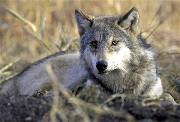First wildlife bills on committee agenda's on Thursday