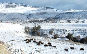 More routes in Yellowstone open to snowmobiles, snowcoaches