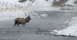 72,400 people visited Yellowstone this winter