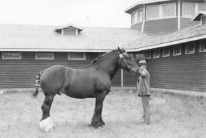 Gallery: Montanans and their horses