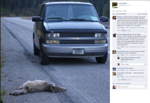 Man brags on Facebook about running over wolves with a van; officials investigate
