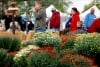 People walk through the colorful mums