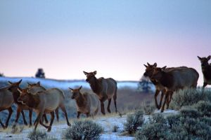 Researcher to discuss Wyoming wildlife migrations