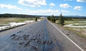 Hot spot: Yellowstone road melts, closing sites