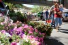 People walk past flowers for sale
