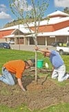 Arbor Day at MetraPark