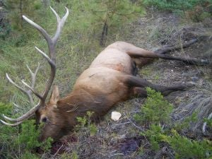 Hays man convicted in elk poaching case