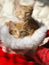 Pets of the week: Comet and Cupid