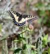 Butterfly lands