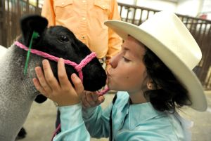MontanaFair Junior Livestock Sale