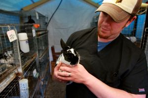 Local bunny, chick owners: Stick to Peeps, chocolate bunnies this Easter
