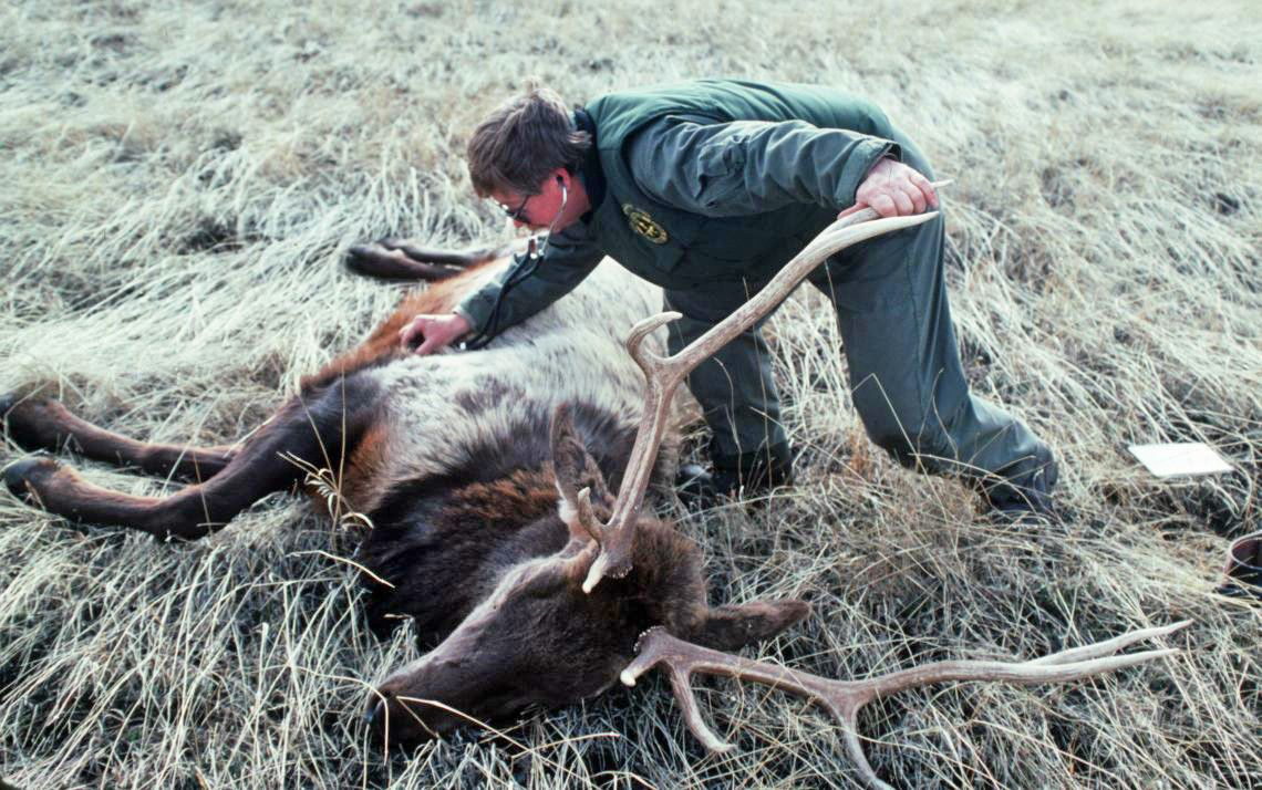 Washington Big Game Researcher Reflects On Lifetime With